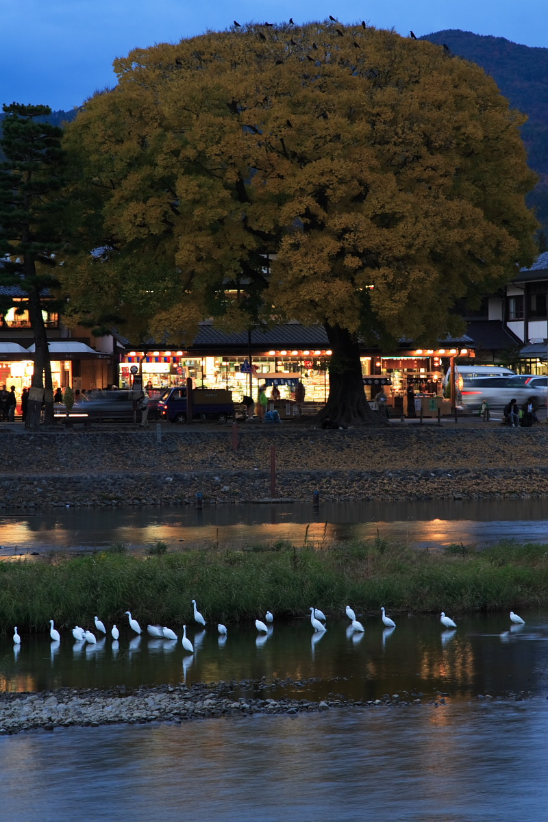 京都 嵯峨野 <嵐山> 紅葉 2_f0021869_938521.jpg