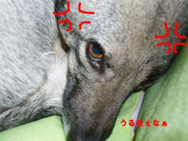 c0000189_16235822.jpg