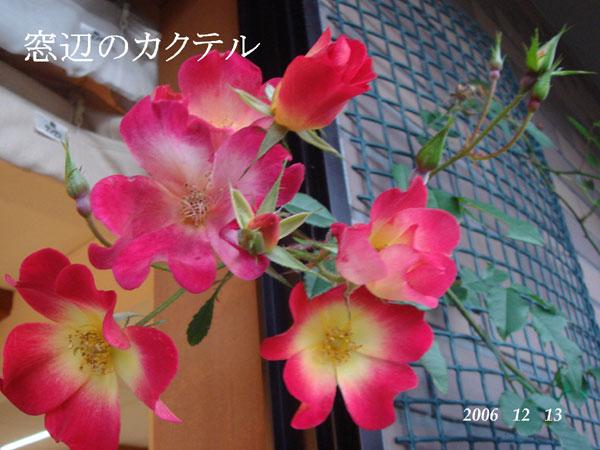 f0057006_1464742.jpg