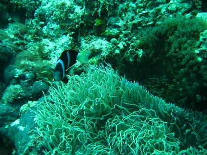 ボホール、パングラオ島で初ダイブ_d0102413_8315388.jpg