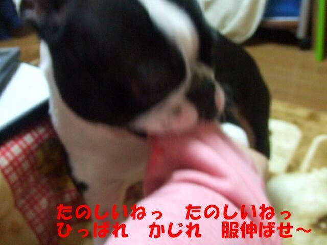 f0059334_1071795.jpg