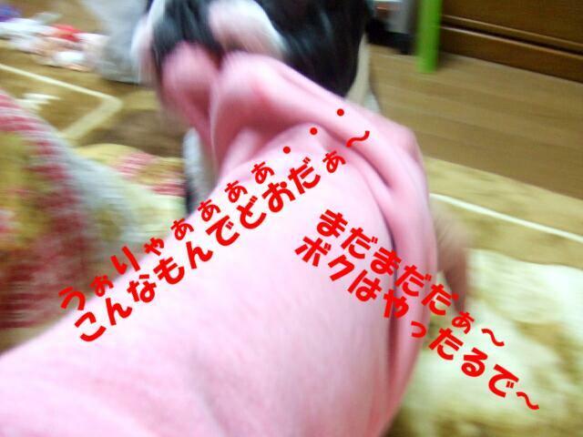 f0059334_1081992.jpg