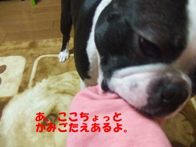 f0059334_10953.jpg