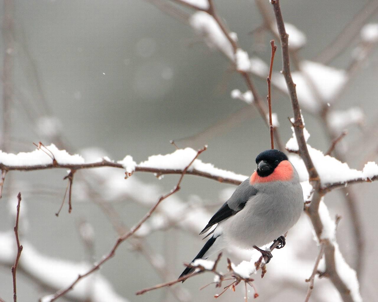 雪と鷽_f0105570_22135673.jpg