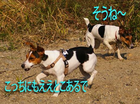 b0002585_10473218.jpg