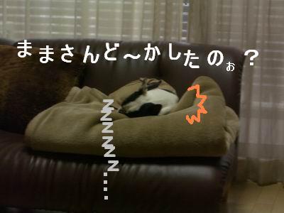 a0086698_205199.jpg