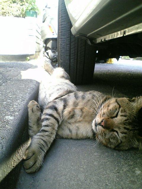 猫の昼寝_e0039513_16115544.jpg