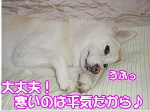 f0011845_2391259.jpg