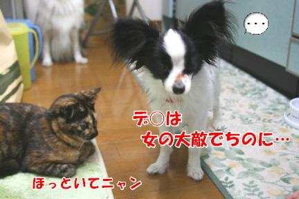 d0013149_934341.jpg