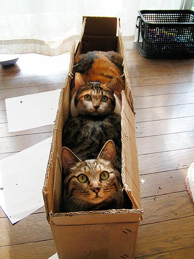 X'masの箱に・・・_a0028451_14332362.jpg