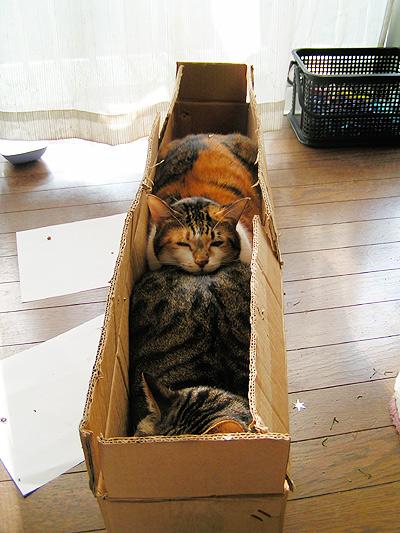X'masの箱に・・・_a0028451_1433787.jpg
