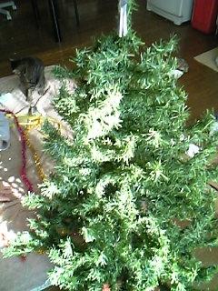 今年ももうすぐクリスマス。ツリーの準備。_a0028451_16511953.jpg