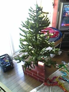 今年ももうすぐクリスマス。ツリーの準備。_a0028451_1651448.jpg