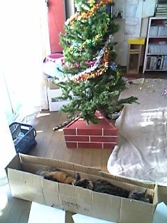 今年ももうすぐクリスマス。ツリーの準備。_a0028451_1745914.jpg