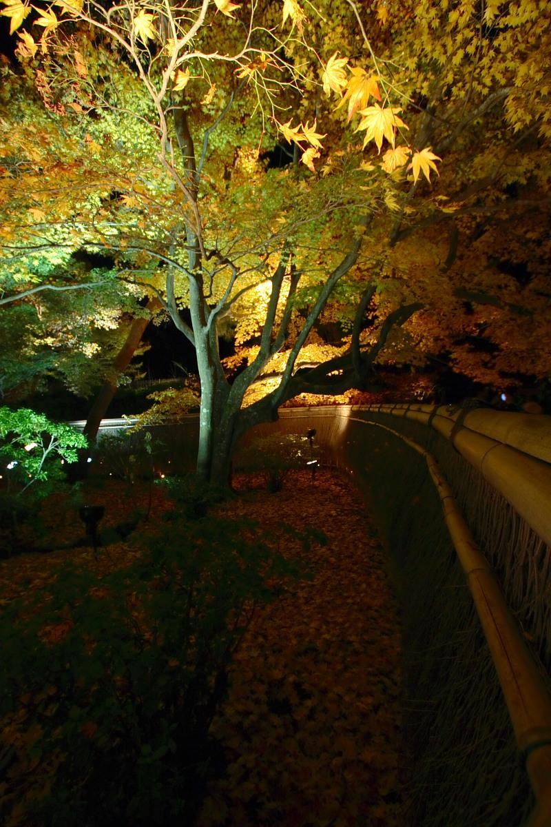 京都 嵯峨野 <嵐山> 紅葉 5_f0021869_22142043.jpg