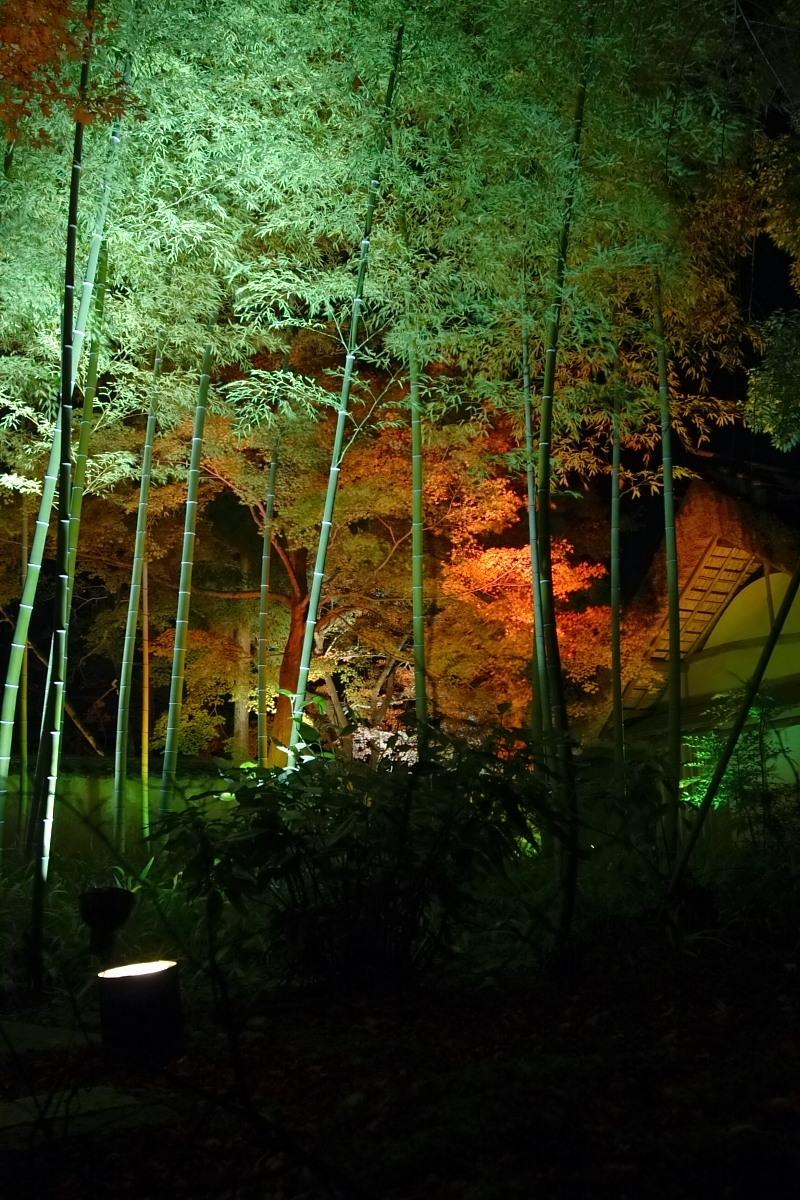 京都 嵯峨野 <嵐山> 紅葉 5_f0021869_22154955.jpg