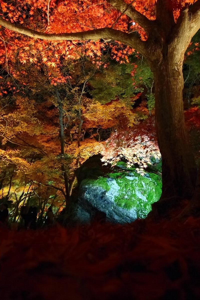 京都 嵯峨野 <嵐山> 紅葉 5_f0021869_22171638.jpg