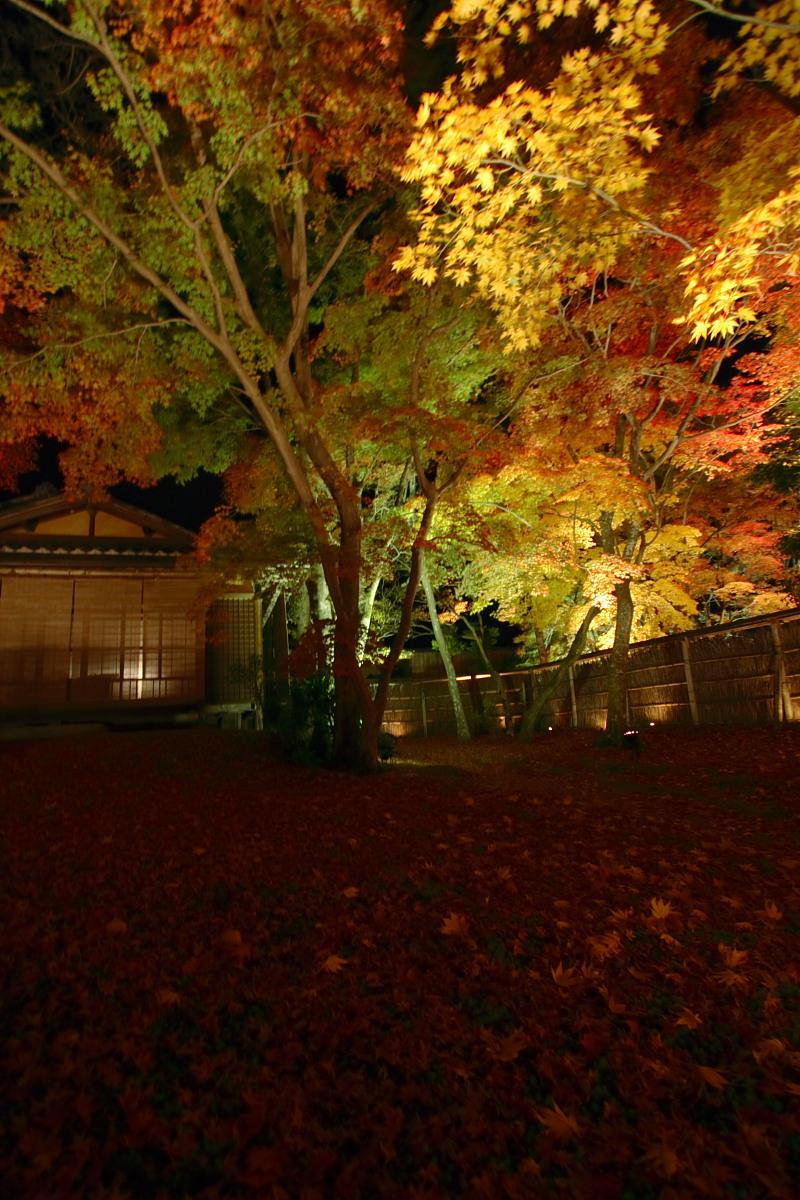 京都 嵯峨野 <嵐山> 紅葉 5_f0021869_22231529.jpg