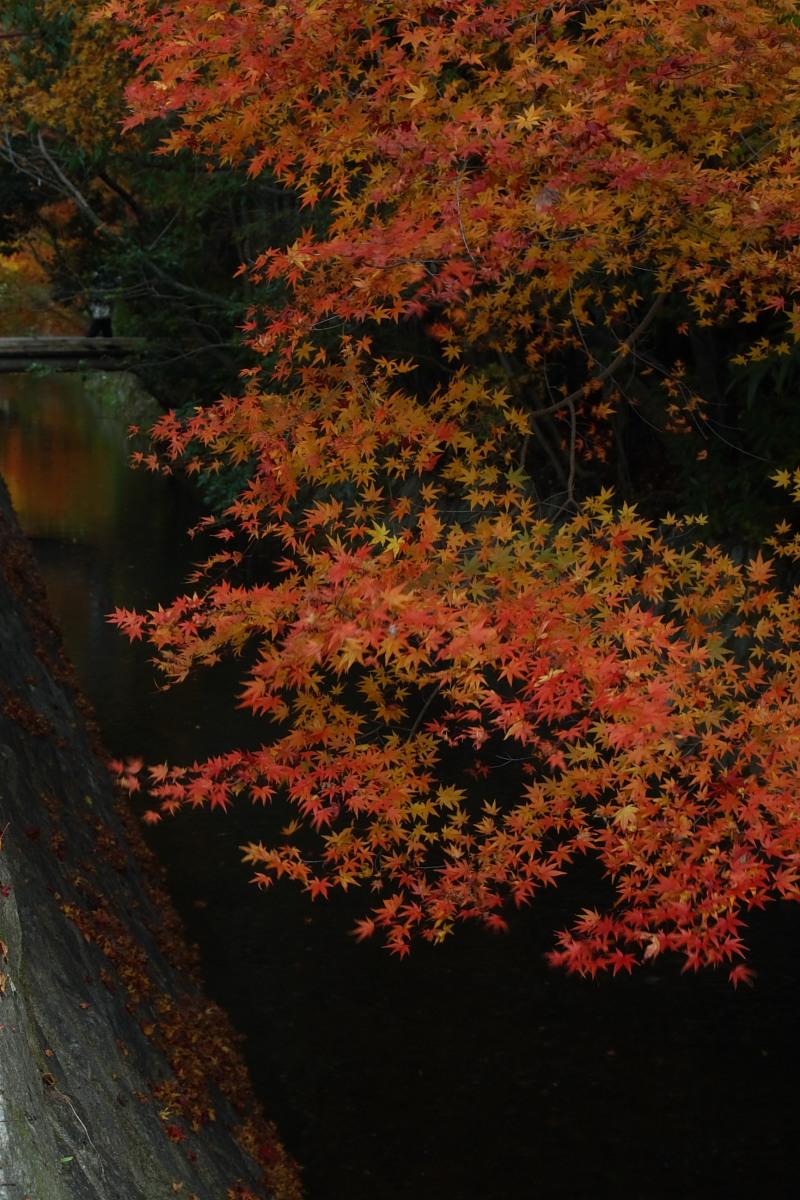 京都 東山 <南禅寺> 紅葉 _f0021869_2257464.jpg