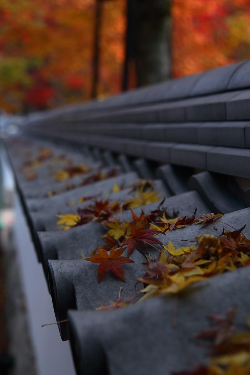 京都 東山 <南禅寺> 紅葉 _f0021869_22585239.jpg
