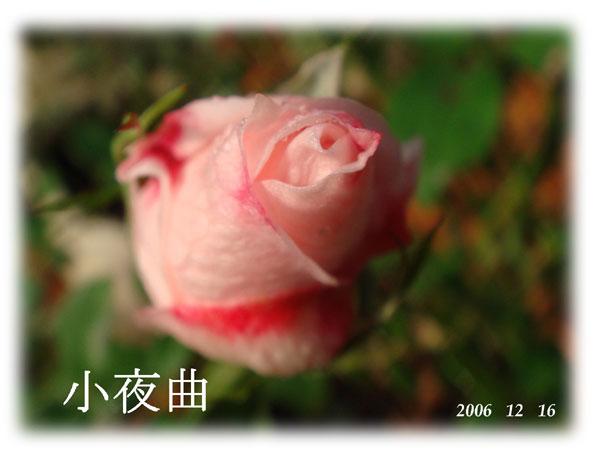 f0057006_16563992.jpg