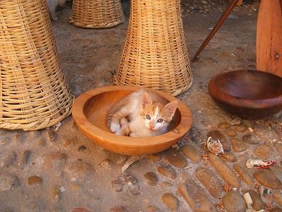 猫だらけ_f0068312_2042614.jpg