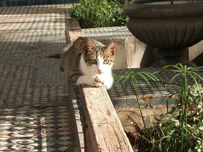 猫だらけ_f0068312_2044340.jpg