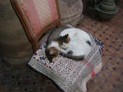 猫だらけ_f0068312_205208.jpg