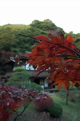横浜 三渓園_e0076932_23574857.jpg