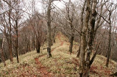 伊勢辻山(1290m) 雲ガ瀬山 ハンシ山 三重と奈良県の県境_d0055236_1412517.jpg