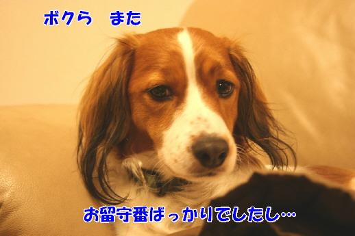 d0013149_2242124.jpg