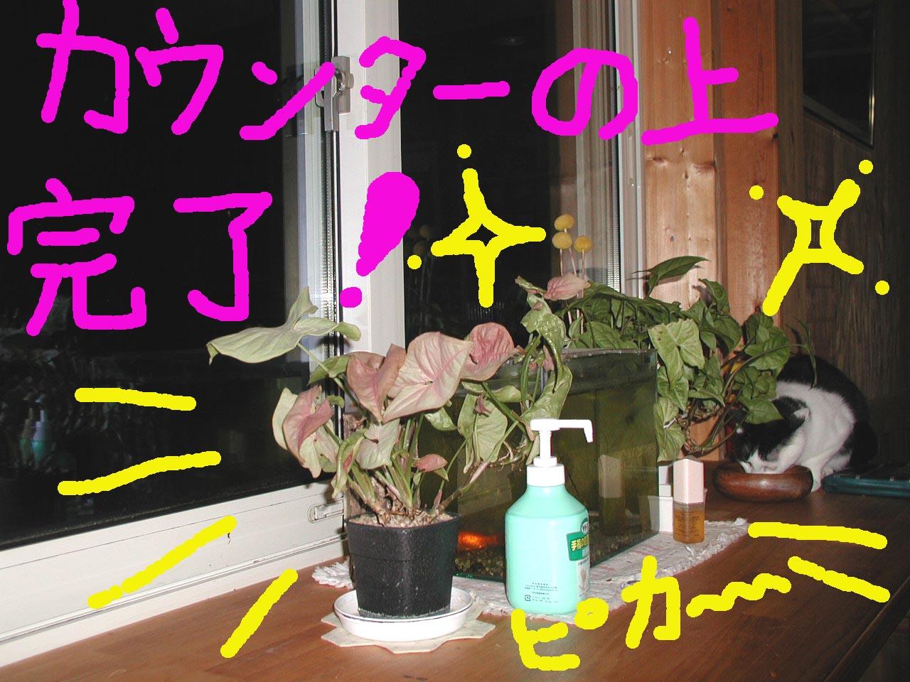 c0105157_22243661.jpg