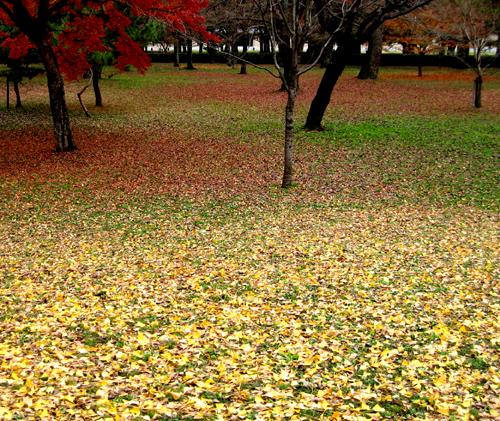 赤緑黄色_a0006081_21381448.jpg