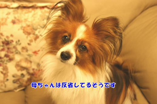 d0013149_2216188.jpg