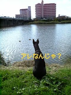 a0088086_23175543.jpg