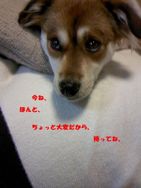 更新が_b0054391_7164462.jpg