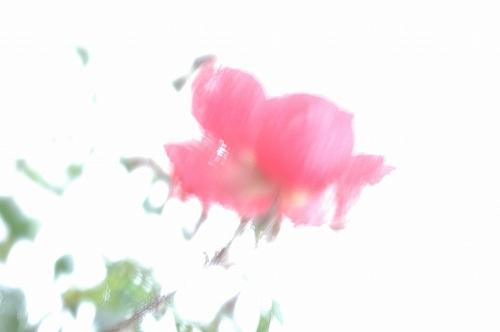 d0010052_2218752.jpg