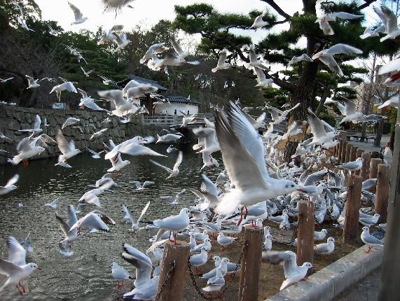 和歌山城と堀と鳥_b0093754_0143174.jpg