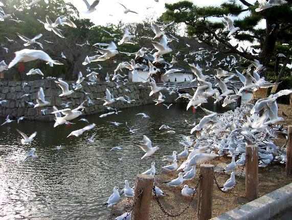 和歌山城と堀と鳥_b0093754_0144485.jpg