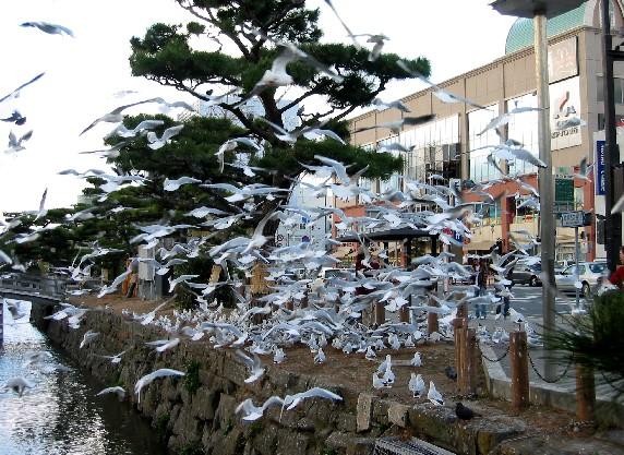 和歌山城と堀と鳥_b0093754_0145626.jpg