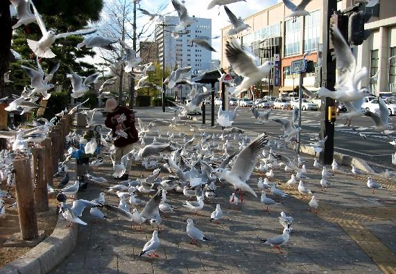 和歌山城と堀と鳥_b0093754_017131.jpg