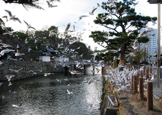 和歌山城と堀と鳥_b0093754_0173967.jpg