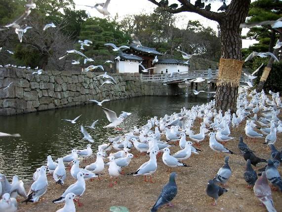 和歌山城と堀と鳥_b0093754_0175296.jpg