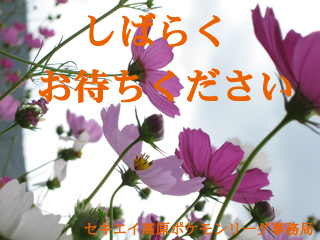 a0081774_0303143.jpg