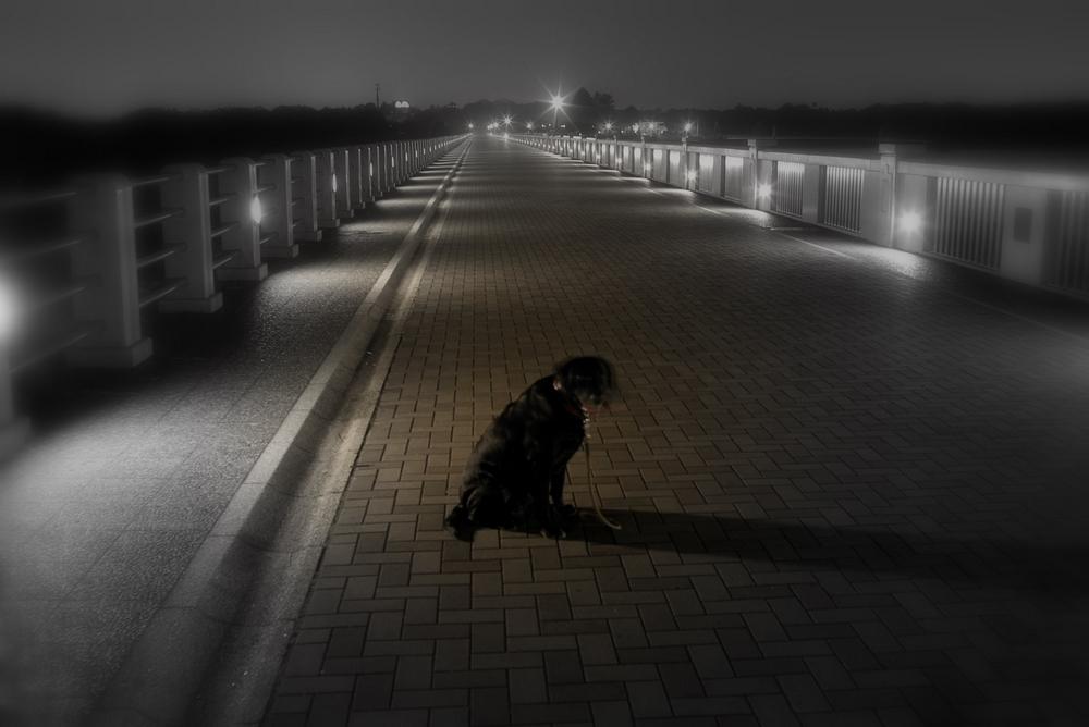 12/17 晴れ 日没後の散歩_a0060230_23174328.jpg