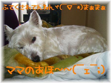 d0080336_113078.jpg