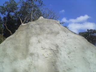 切り崩した山をそのまま固めます。_d0053751_88870.jpg