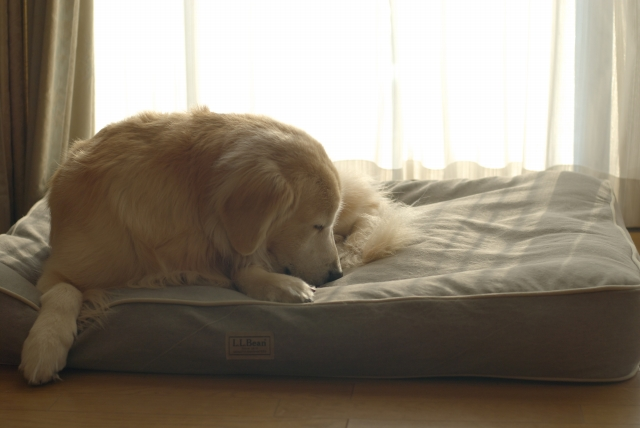 Dog Bed_f0018464_21291921.jpg
