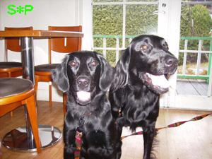 デューリー&ライカ、&アンジー_b0084194_12535883.jpg