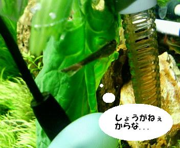 c0096642_1371717.jpg